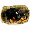 Дышащая собака Ротвейлер